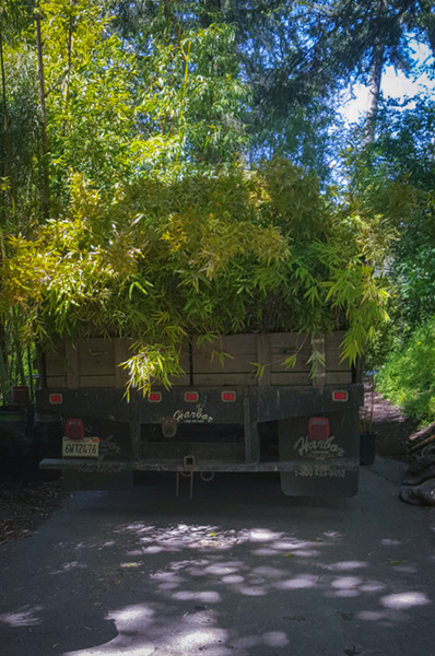 bamboo-delivery-truck