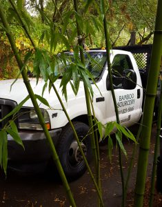bamboo delivery, bamboo shipping, bamboo bay area, bamboo san rafael, bamboo berkeley, bamboo santa rosa, bamboo san francisco, live bamboo