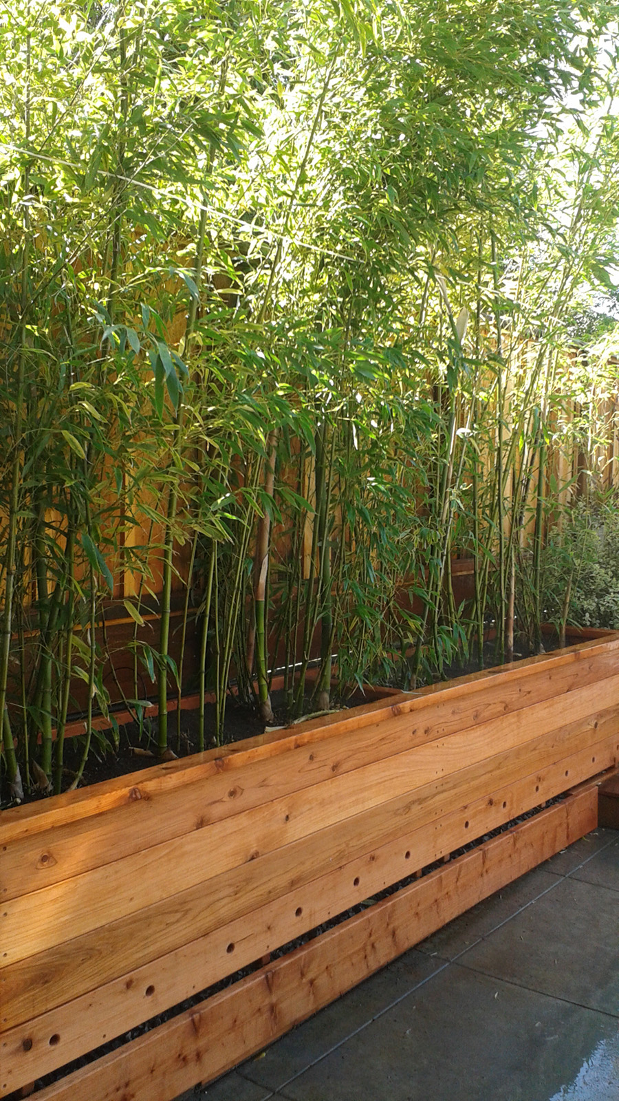Custom Redwood Planter Box Bamboo Sourcery Nursery Gardens