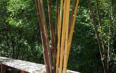 Bamboo Canes & Poles