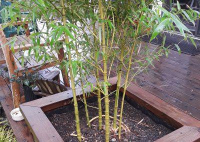 bamboo-sm-planter2
